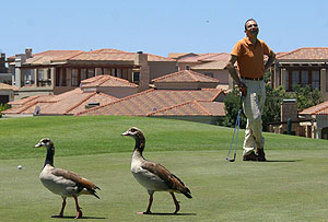 Walter Schärer im Goose Valley Golfplatz