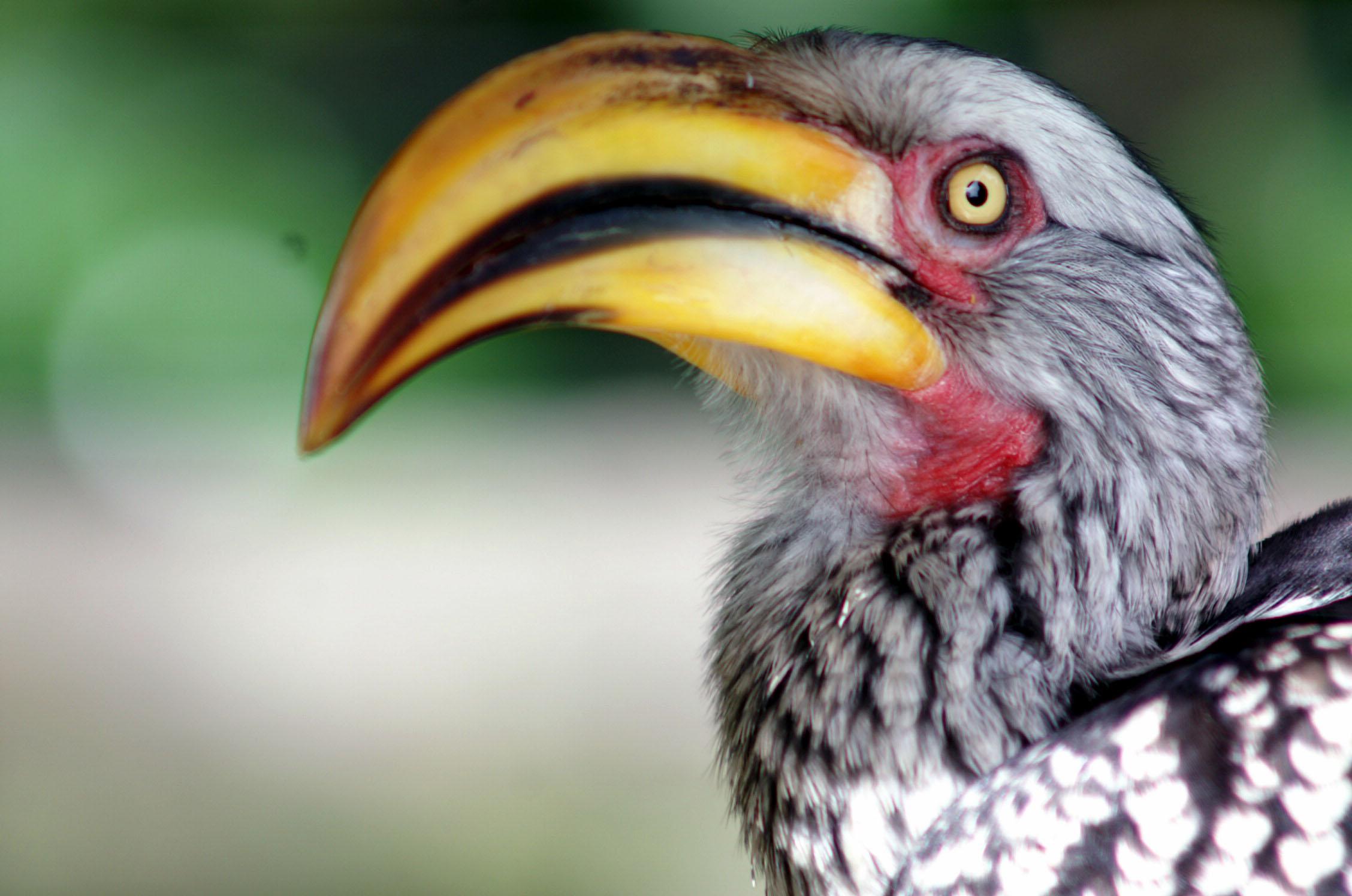 Im Birds of Eden