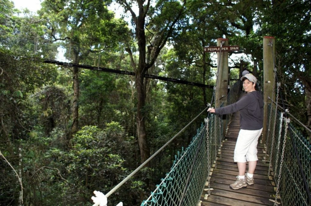 Treetop Walk im Lamington National Park