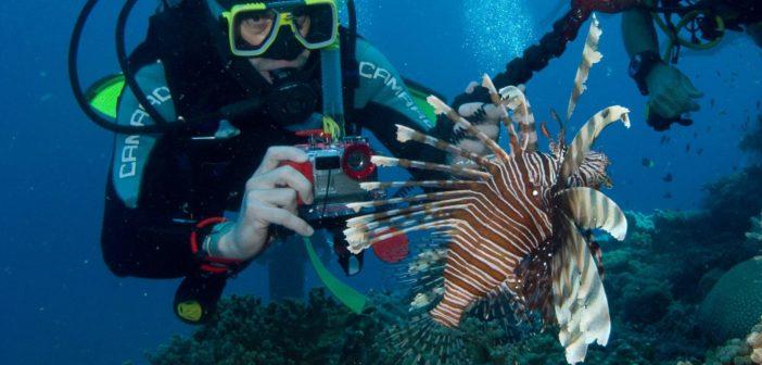 Taucherlebnis am Great Barrier Reef