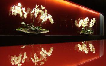 Orchideen im Park Plaza Hotel Westminster Bridge in London