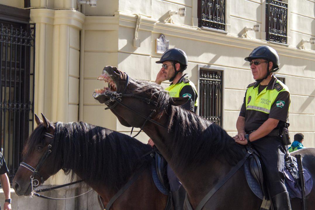 Berittene Polizei an der Ampel in Granada, Spanien