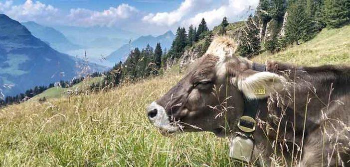 Kuh-Hoch-Ybrig-Vierwaldstaettersee