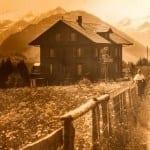 Historisches Foto der Alpenrose