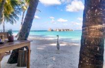 Malediven-Graureiher Bob beim Frühstücksrestaurant