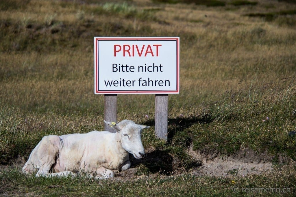 Schaf Ellenbogen Sytl
