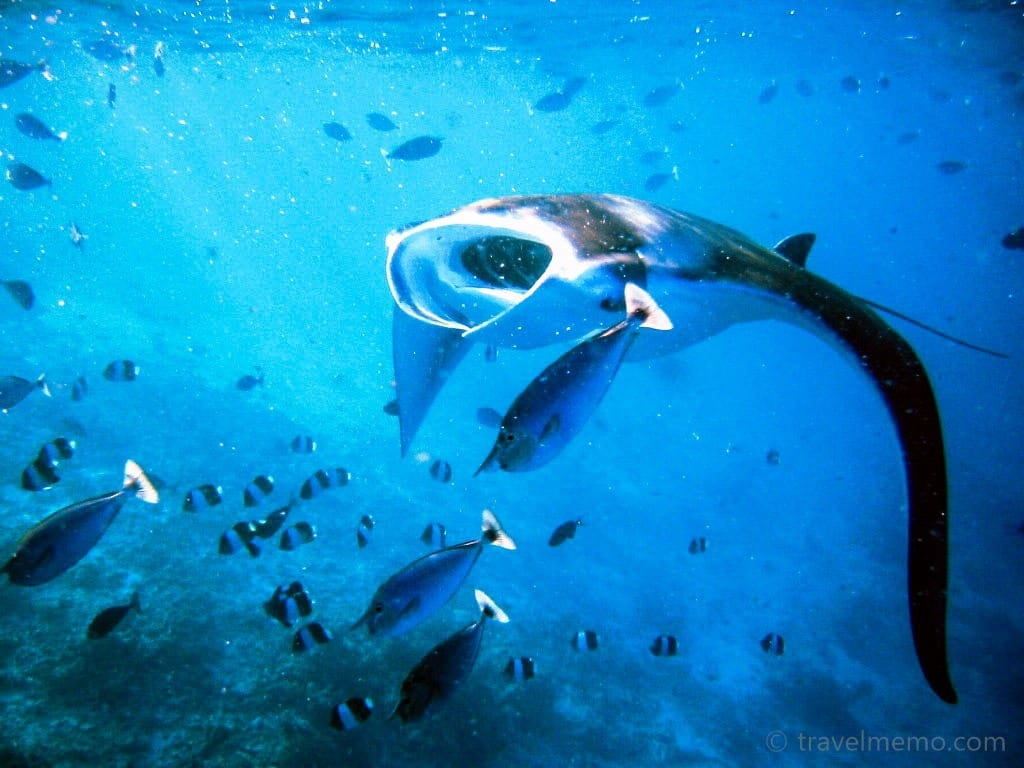 manta-ray-maldives-11