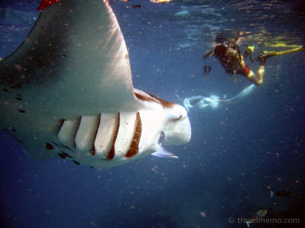 manta-ray-maldives-15