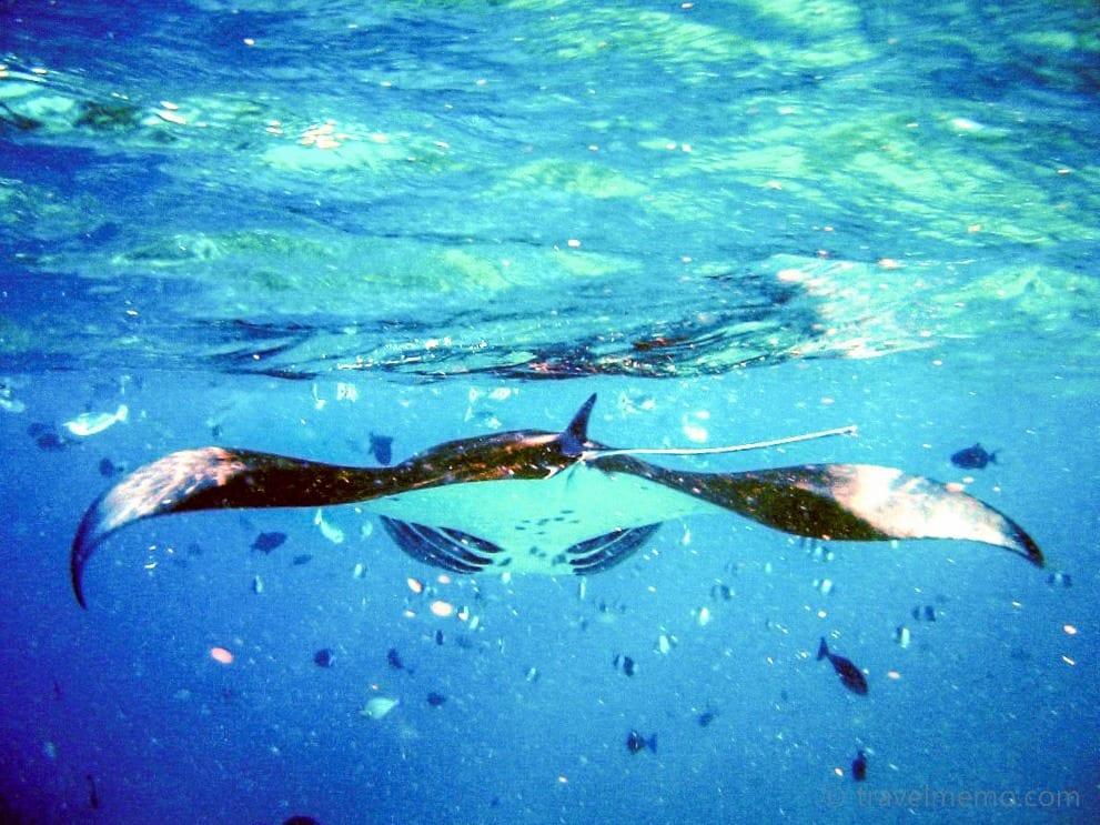 manta-ray-maldives-17