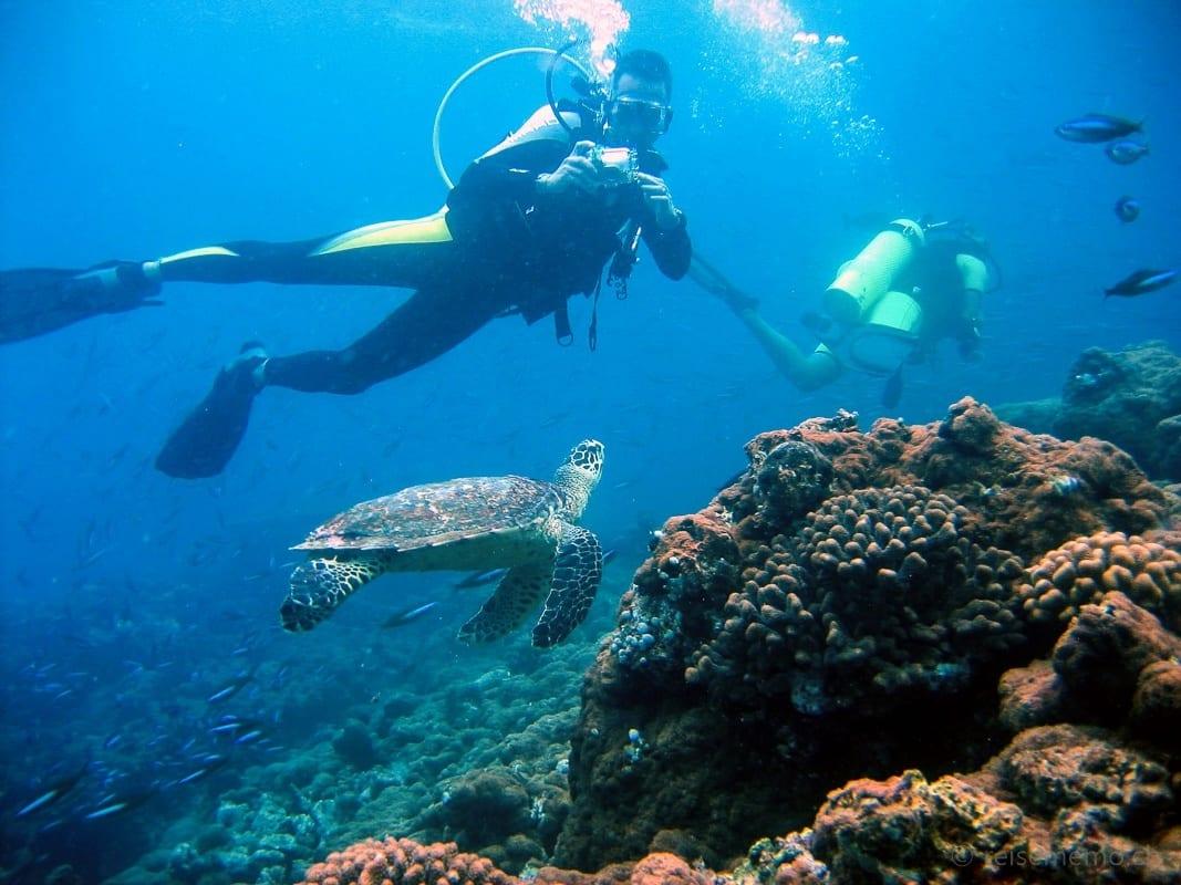 Walter Schärer beim Tauchen mit Schildkröten auf den Malediven