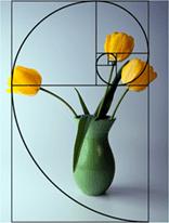 Vase-Tulpen-Proportionen
