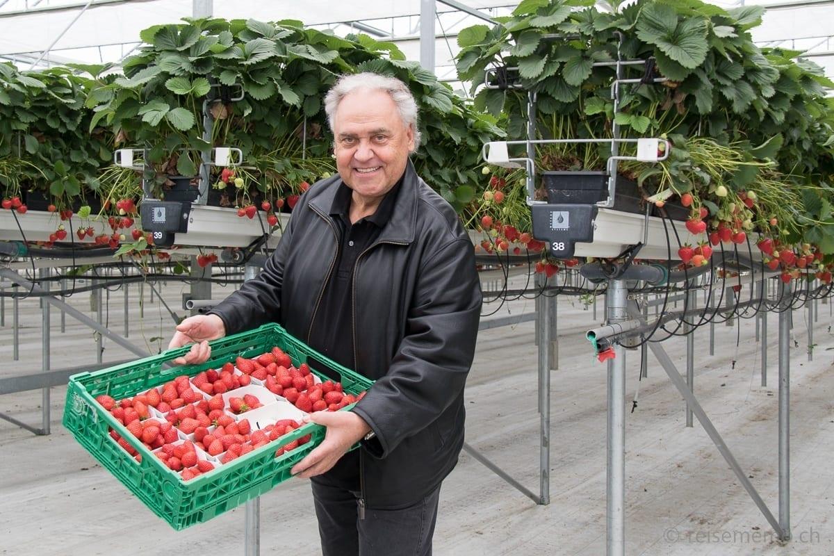 August Minikus beim Einkauf von Thurgauer Erdbeeren