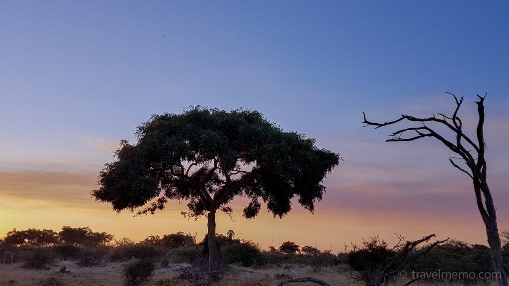 Moremi-Game-Reserve-sunset-tree-1024x576