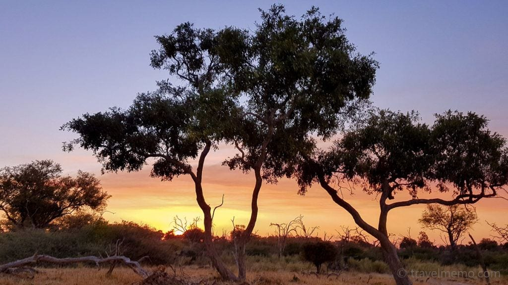 Moremi-Game-Reserve-tree-sun-1024x576
