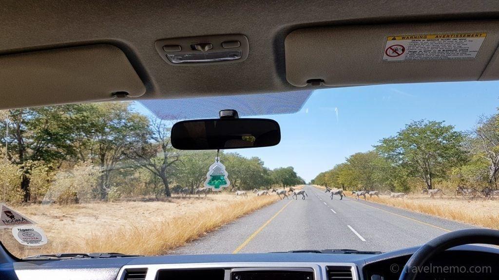 Zebras überqueren die Strasse des Chobe Nationalparks