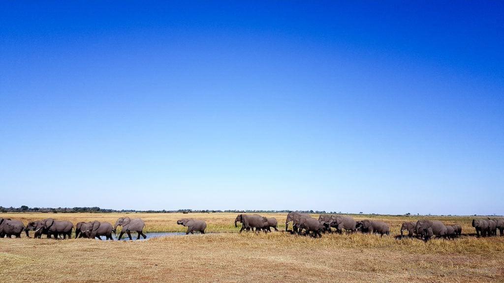 Elefantenherde Linyanti Botswana