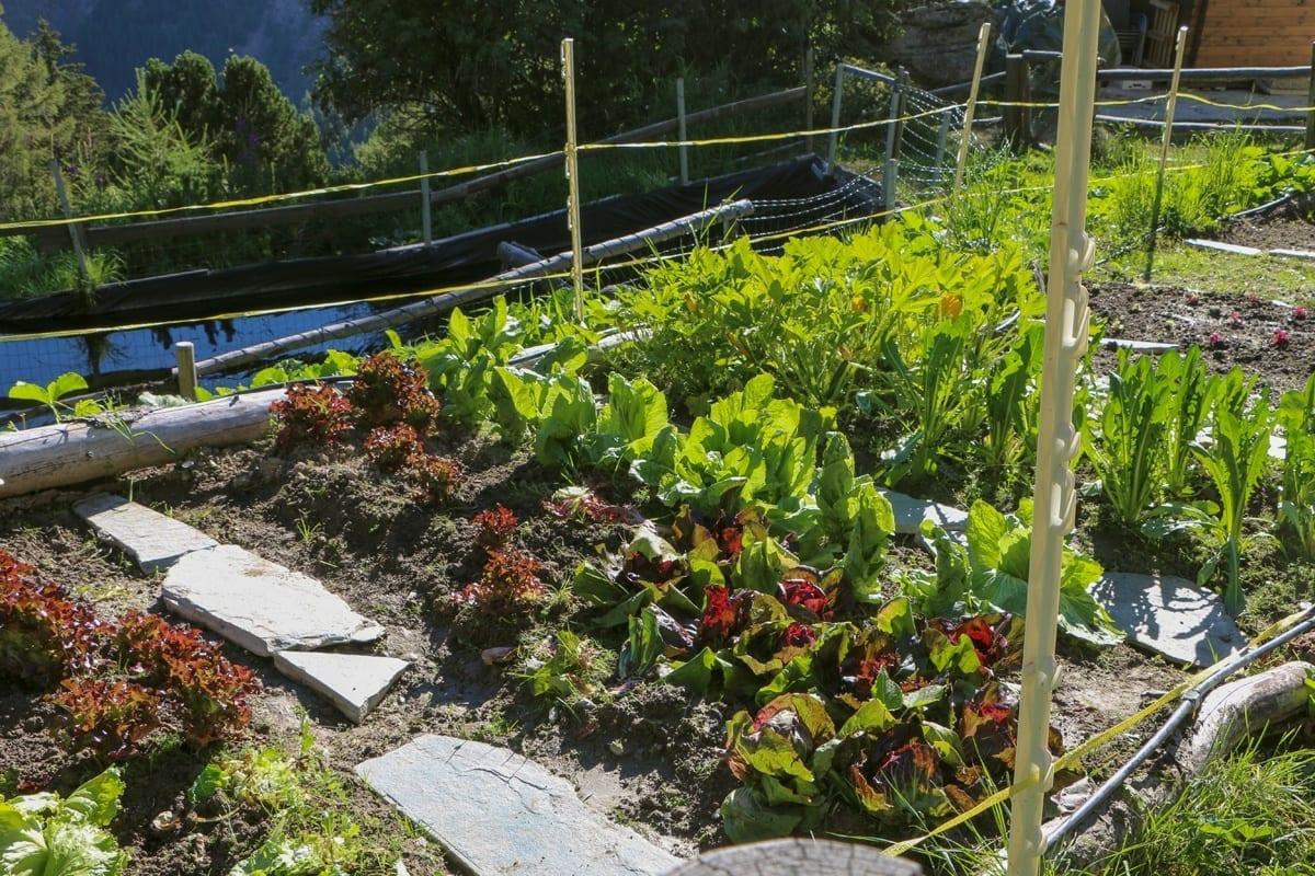 Markus Neffs Gemüsegarten und Fischweiher Waldhotel Fletschhorn Saas Fee