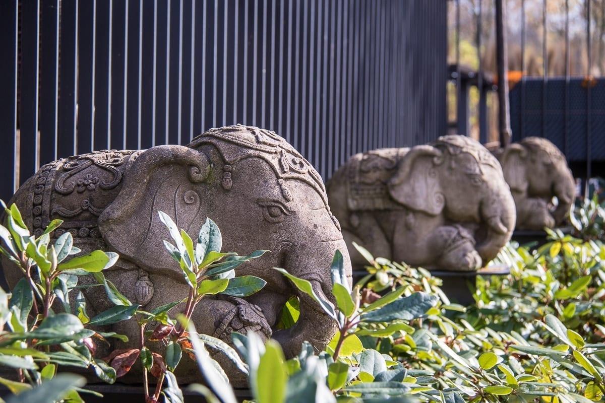 In Thailand gilt der Elefant als ein Glückssymbol