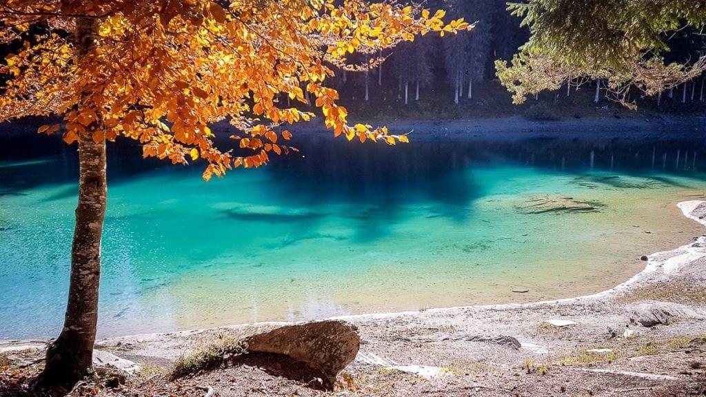 Herbstlicher Baum am Caumasee