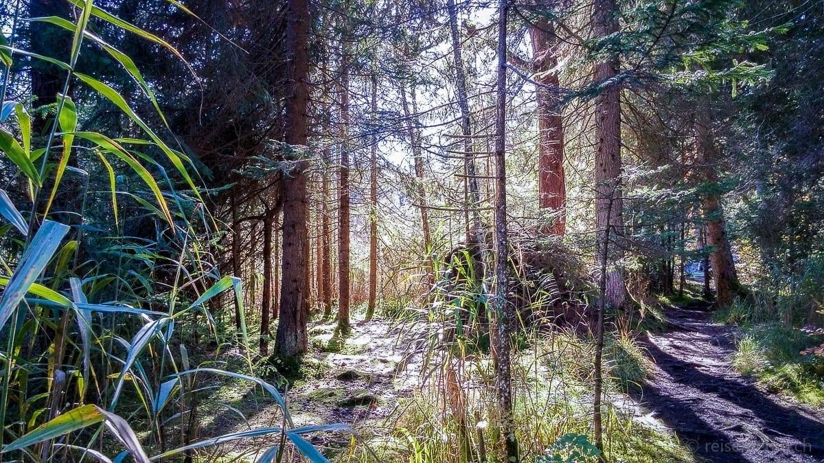 Wanderung im Flimserwald in Richtung Caumasee oder Lag la Cauma