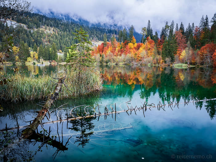 Crestasee bei grauem Wetter im Herbst mit goldenen Blättern