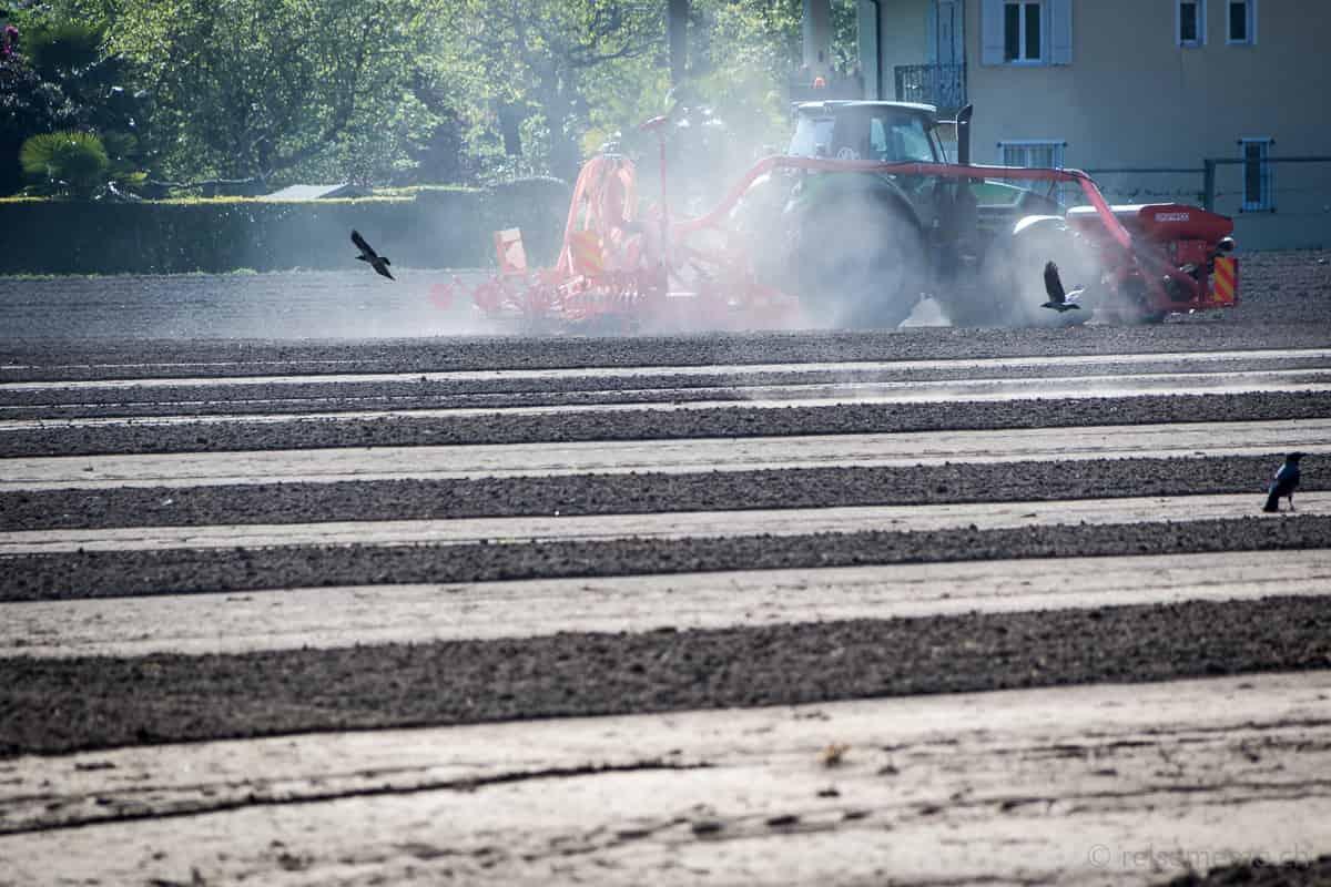 Traktor im Reisanbau beobachtet von hungrigen Krähen