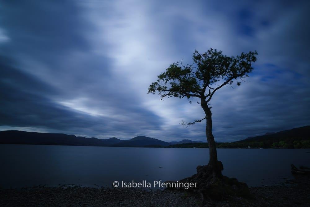 Milarrochy Bay Baum in Schottland