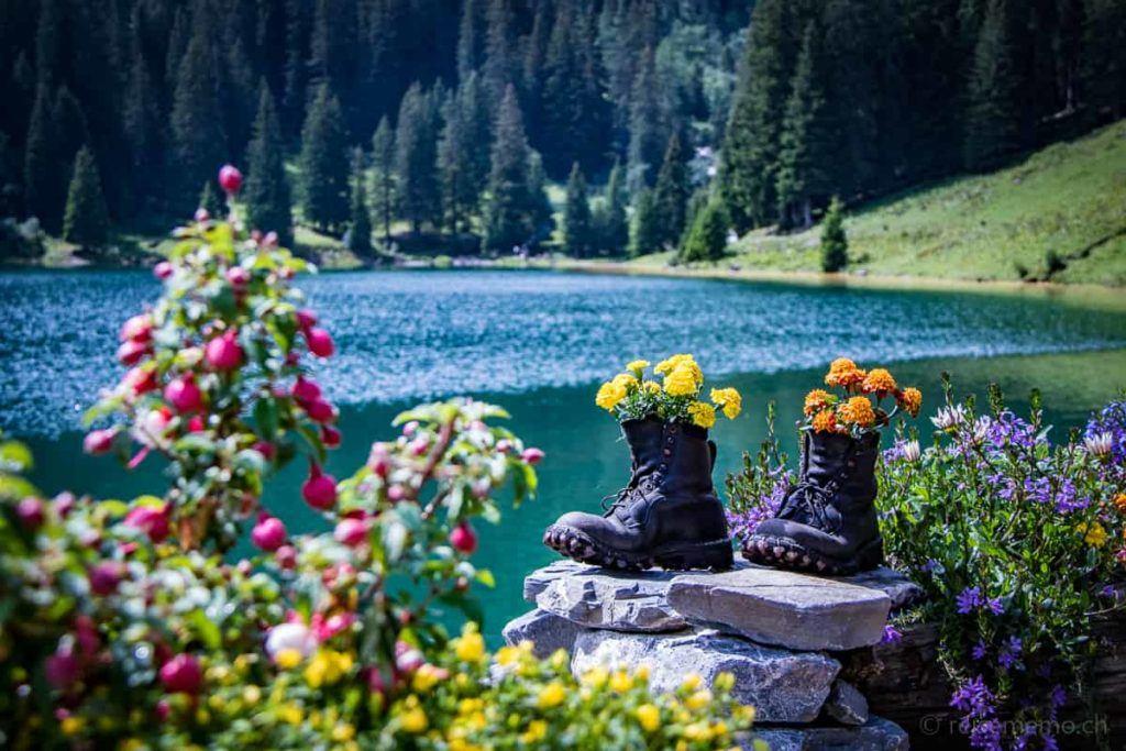Blumen in Wanderschuhen am Arnensee