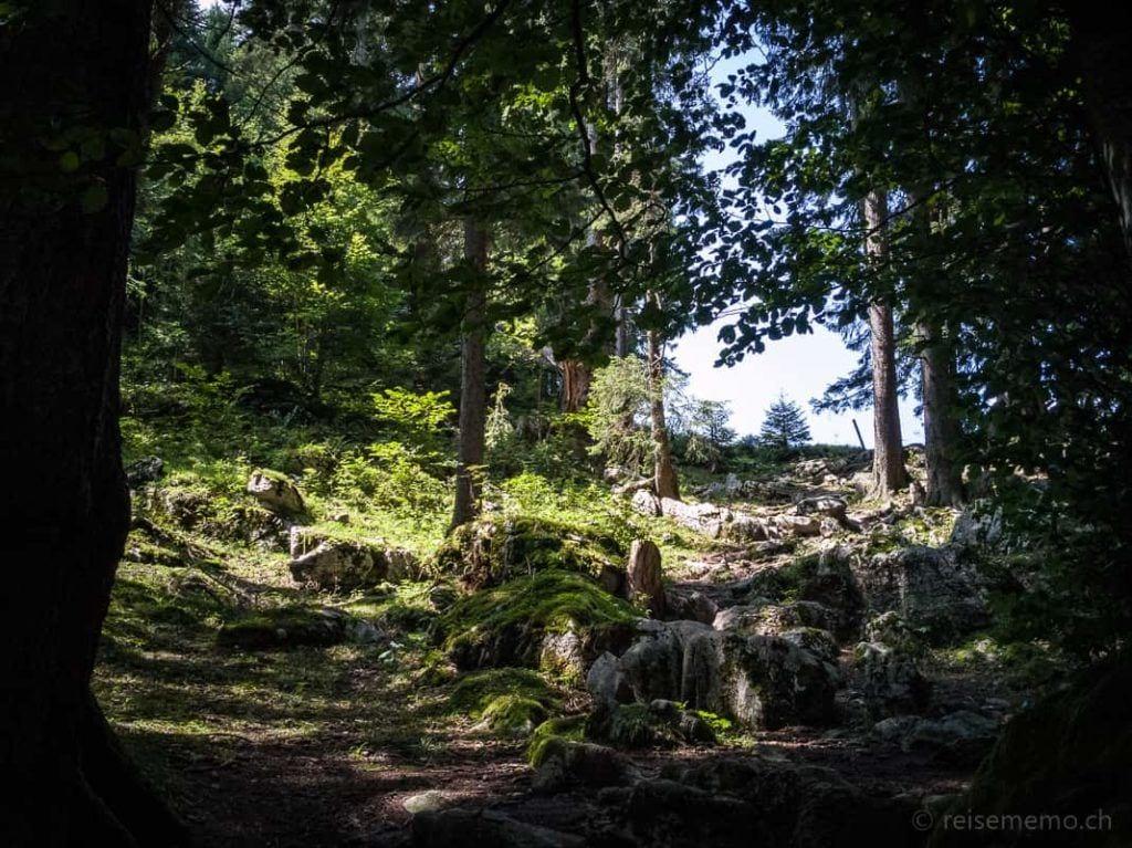 Wanderweg im Wald in Richtung Habergschwänd