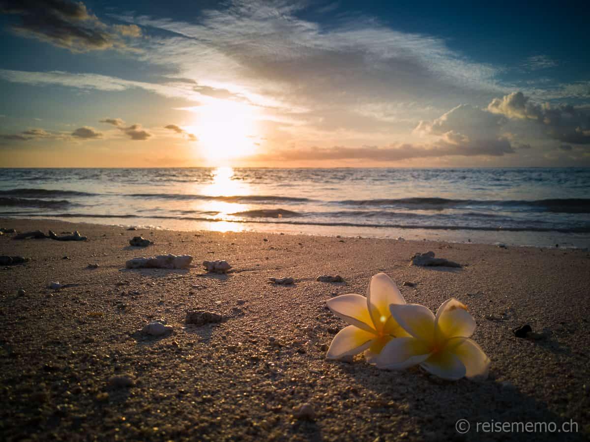 Frangipani Blüten am Strand
