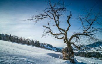 Baum und Holzstapel im Atzmännig