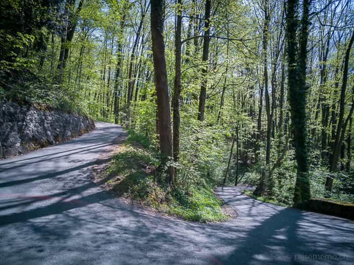 Kurviger Wanderweg durch den Wald