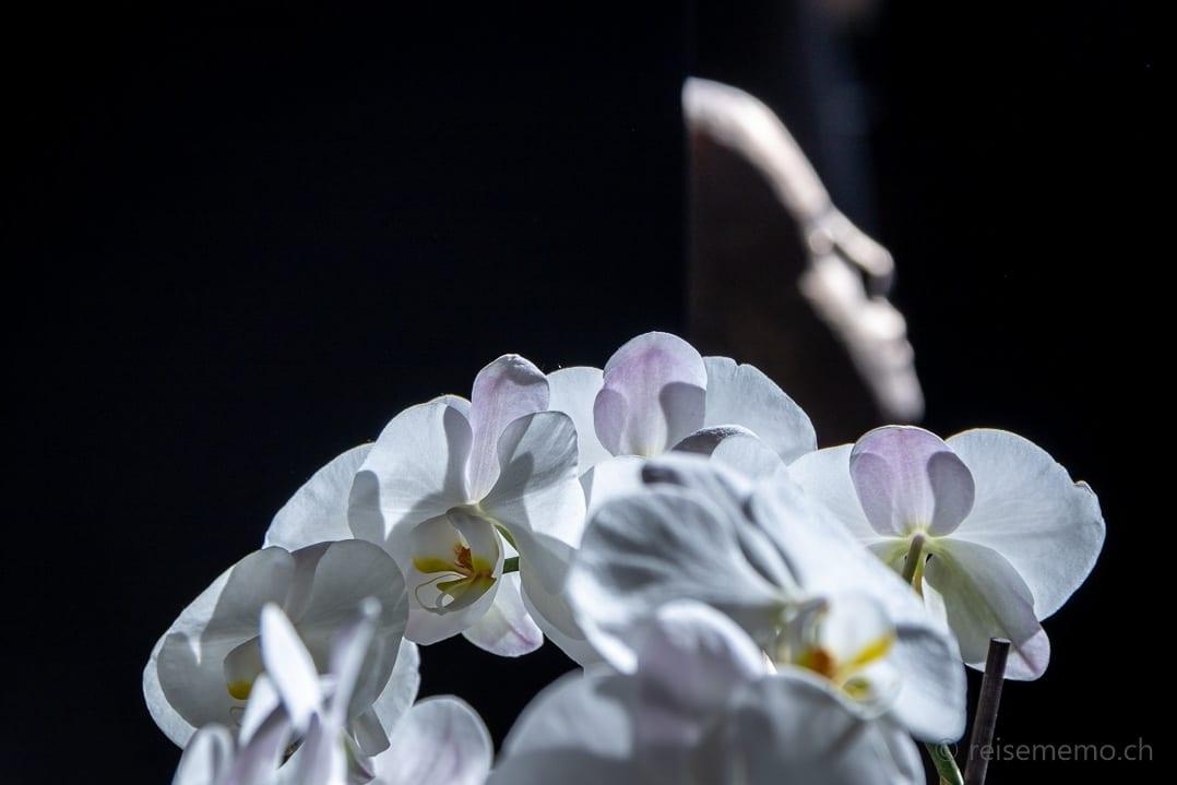 Orchideen mit Kunstobjekt Lobby My Arbor