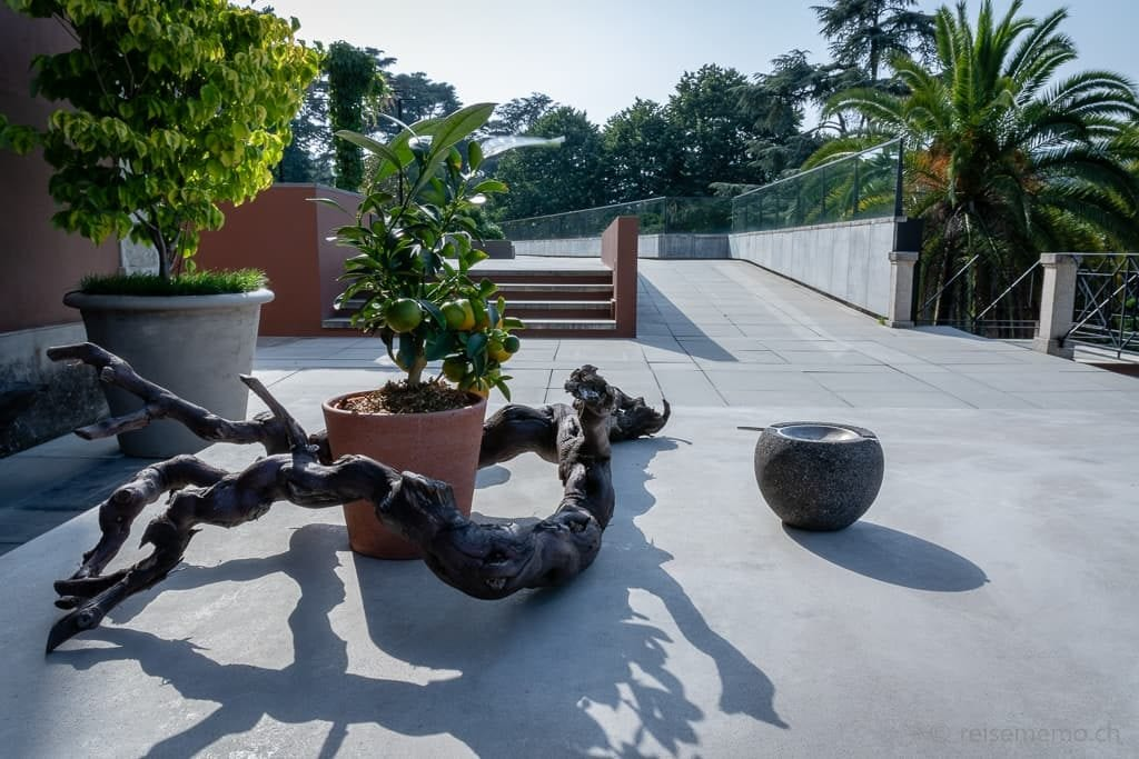 Zitronenbaum auf der Terrasse