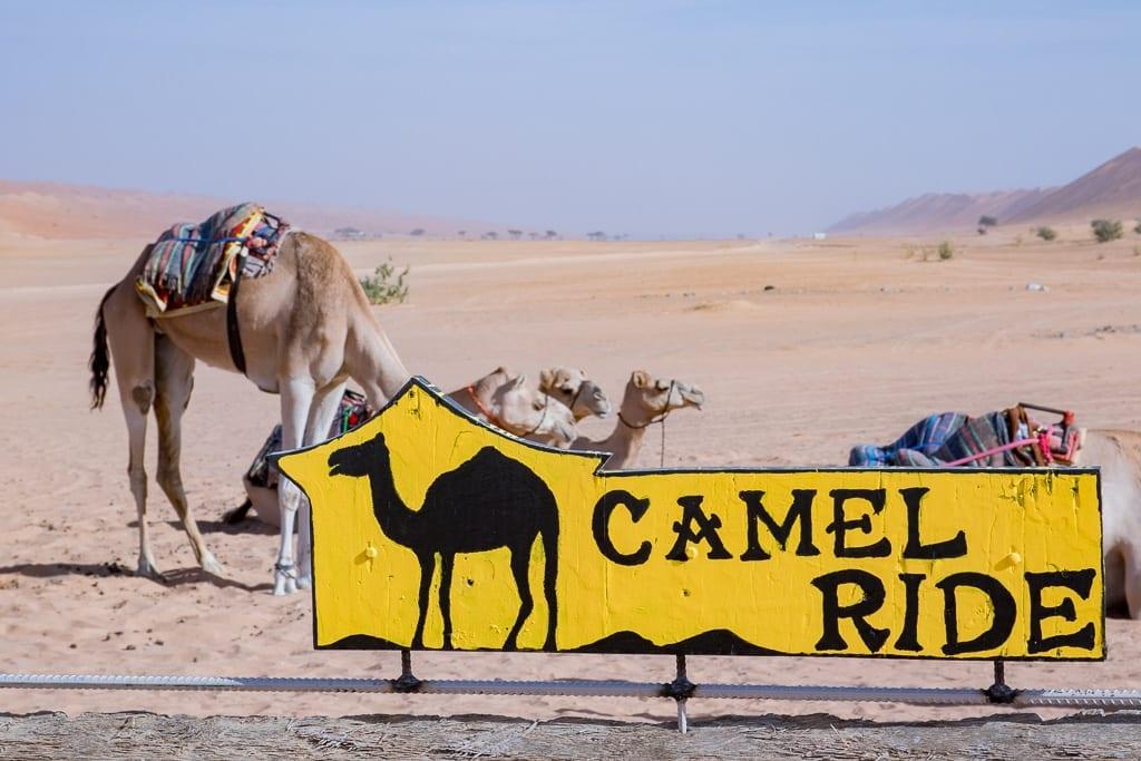 Camel Ride im Desert Night Camp im Oman