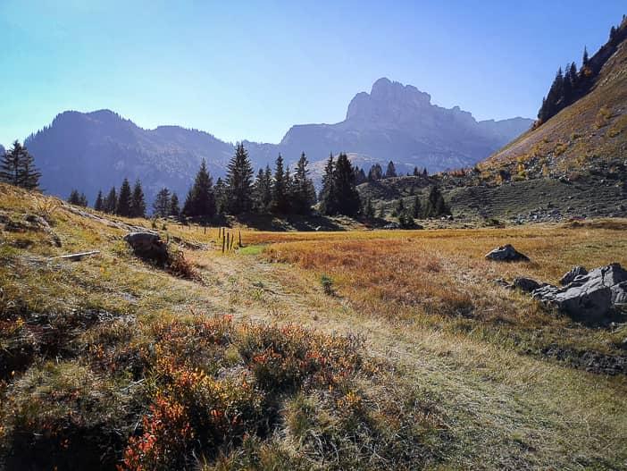 Hochmoor auf dem Weg zum Oberblegisee