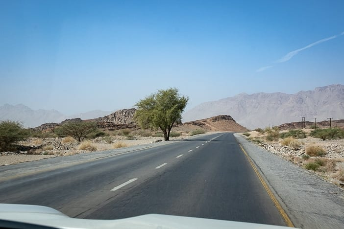 Country road with tree in Oman