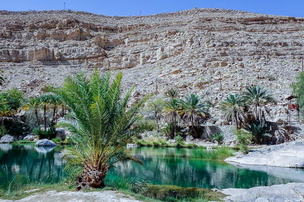 Palme am See im Wadi Bani Khalid