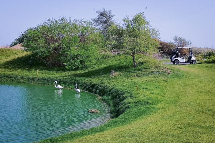 Flamingos im Al Mouj Links Golfplatz