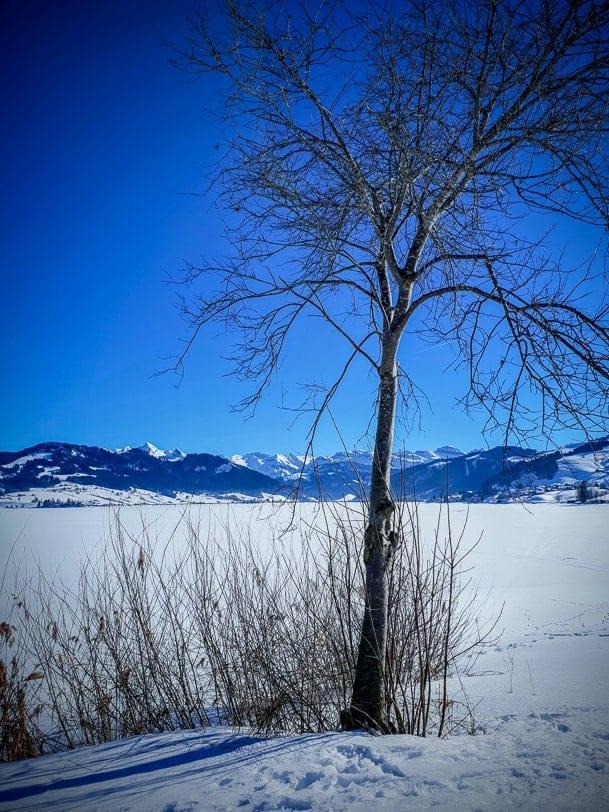 Winterpanorama am gefrorenen Sihlsee bei Einsiedeln