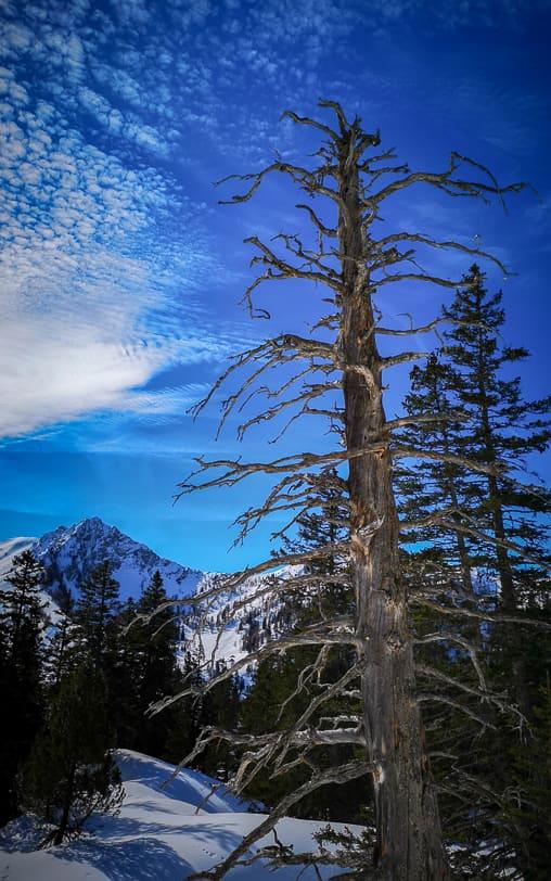 Winterwanderung von Malbun zur Alp Sass