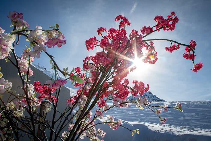 Sonne über dem Blumengesteck der Motta Bar