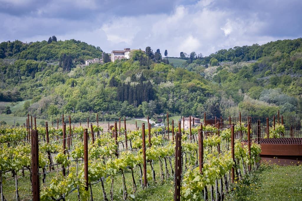 Dachaufbau mit Weinreben der Cantina Antinori und Aussicht in die Toskana