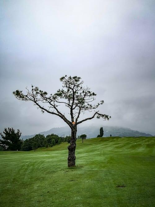 Baum im Fairway von Golf Basozabal