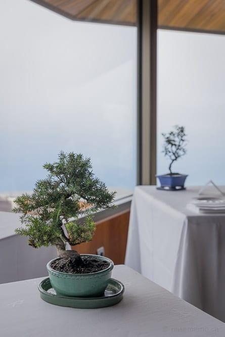 Bonsai auf dem Restauranttisch mit Aussicht in die Bucht von Biskaya
