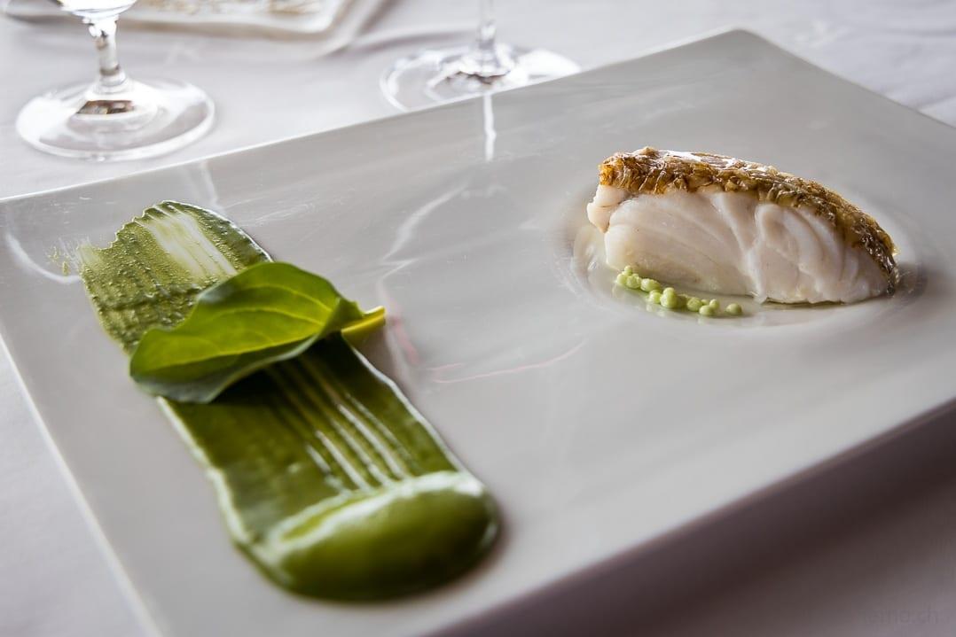 Gericht vom Seehecht im Algensud mit Plankton-Crème und Austernblatt