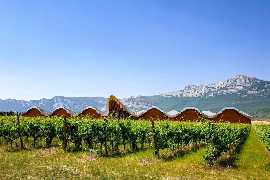 Rebstöcke vor dem Ysios Rioja Weingut von Santiago Calatrava