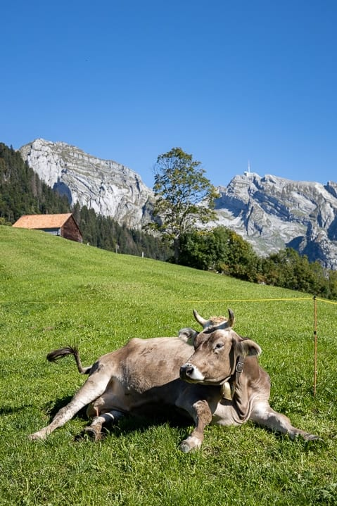Wanderung in Richtung Gräppelensee im Toggenburg | Reisememo