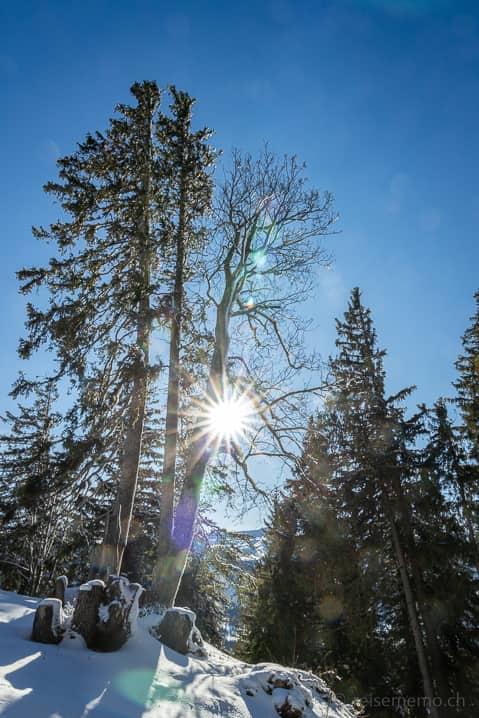 Verschneiter Wald bei der Alp Fros