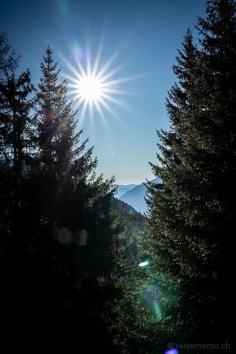 Sonnenschein über Tessiner Fichtenwald